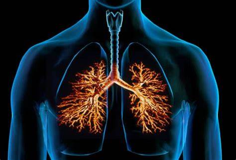natural remedies for bronchitis in bengali